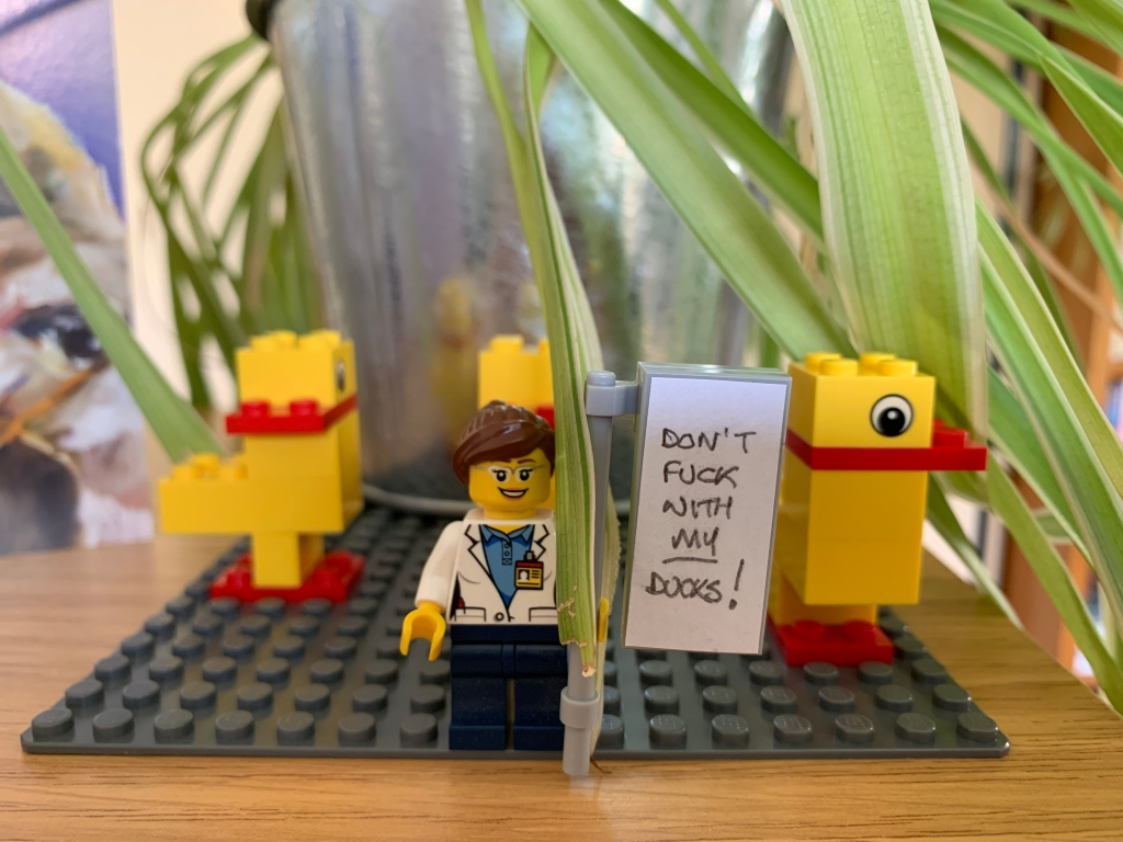 Three ducks stuck to a Lego baseboard. In front stands a Lego figure holding a sign.