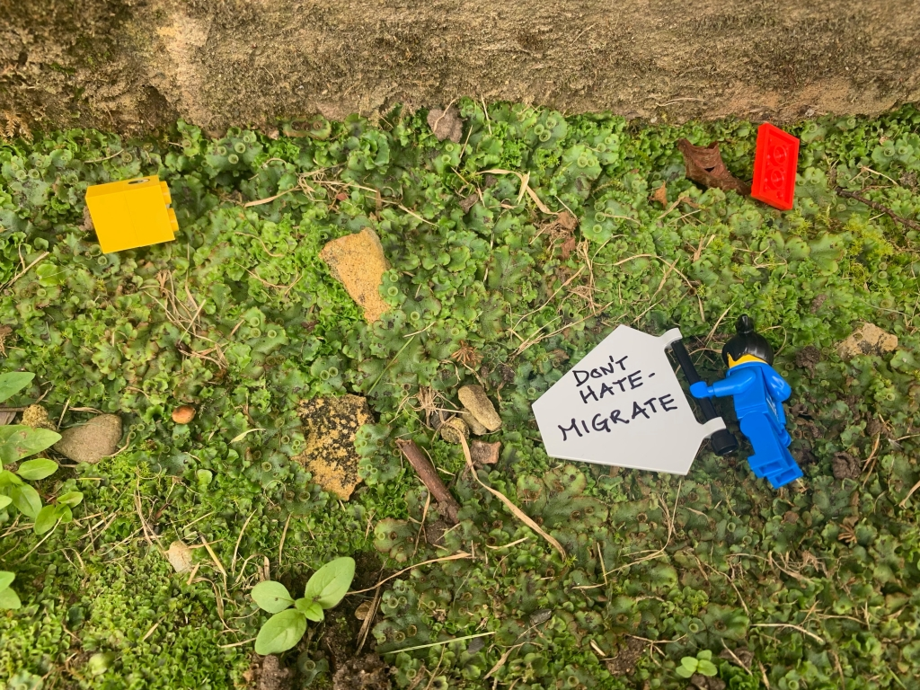 "Looking down at the grass. A Lego figure lies face down amongst the scattered remains of a duck. The figure is still holding their banner. A message on the back reads ""Don't hate - migrate"""